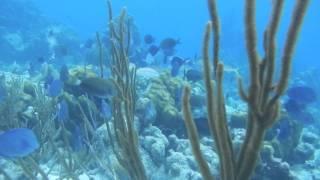 Snorkelen op Bonaire