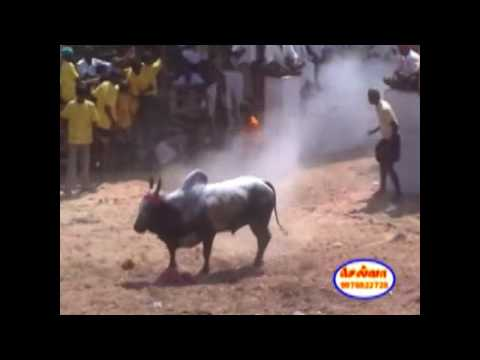 Jallikattu - Narthamalai video