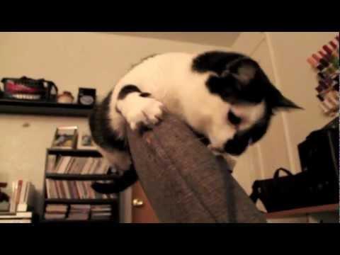 Игривая кошка по имени Лиз Лемон