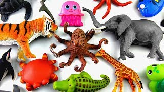 Learn Wild Zoo Animals Names Safari Animals Names Education For Kids