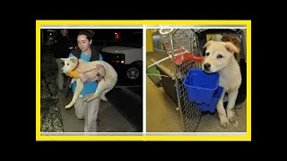 | Dog Rescue Stories14 Dogs Rescued From The Korean Meat Trade Will Start New Lives In The US