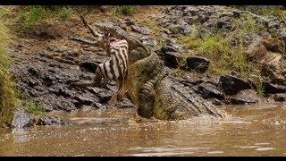Holiday in Kenya: Masai mara safari