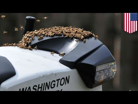 Caught on tape: Bees swarm police motorcycle in Oregon