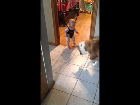 perro enseña a saltar a bebe en cargador elastico