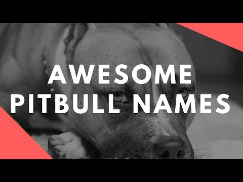 Badass Pitbull Names for Males and Females