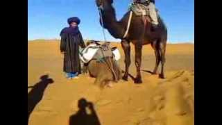 Morocco Sahara Desert Over night.Camel Ride.Desert Camel Trip
