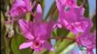 Orquideas polinizacion natural