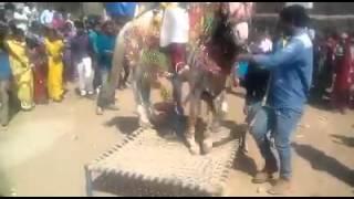Ghoda dance
