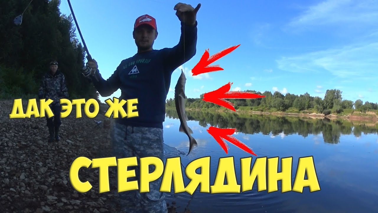 рыбалка в кировской области на стерлядь