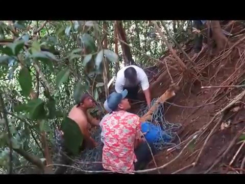 Harimau Sumatera Terjerat di Simalungun