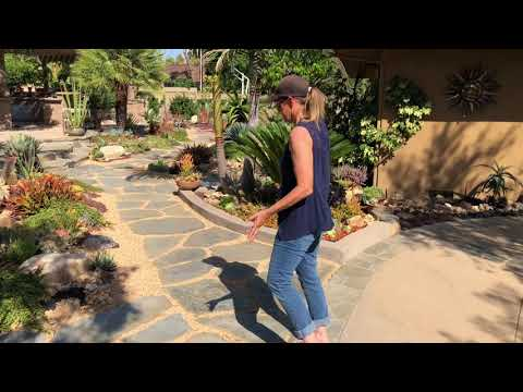 Succulent Garden Walkthrough in Tustin, Ca with Laura Eubanks