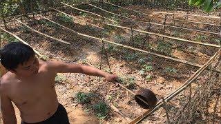 Primitive Technology:Watering system!Primitive life-wilderness