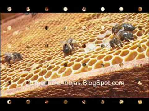 Transporte de colmenas de abejas