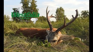 Jagd auf sibirischen Rehbock in Kasachstan