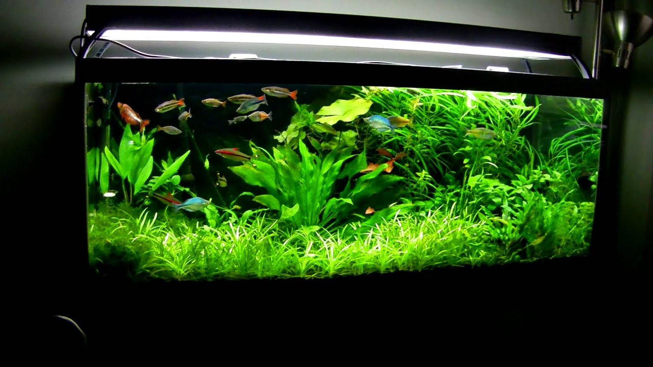 75 gallon planted aquarium march 2013 youtube for Narrow fish tank