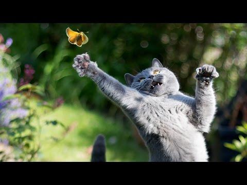 【ほっこり系】選りすぐりな動物たちの面白可愛いコンピレーション!