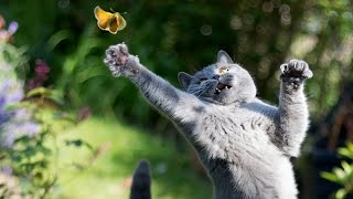 Only funny animals can make you laugh so hard you cry - Funny animal compilation