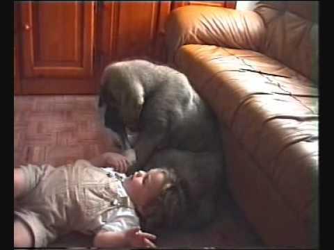 Cachorro de mastín y bebé. Juegos