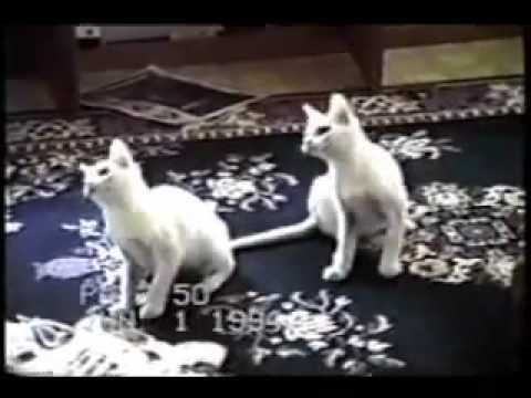 De grappigste katten