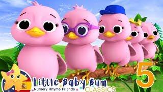 Canciones Infantiles   Cinco Pajaritos   Dibujos Animados   Little Baby Bum en Español