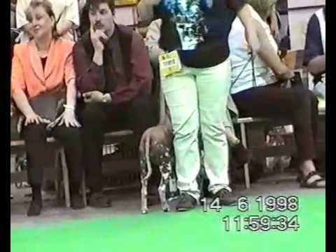 World Dog Show Helsinki 11-14.06.1998 (xolo).avi