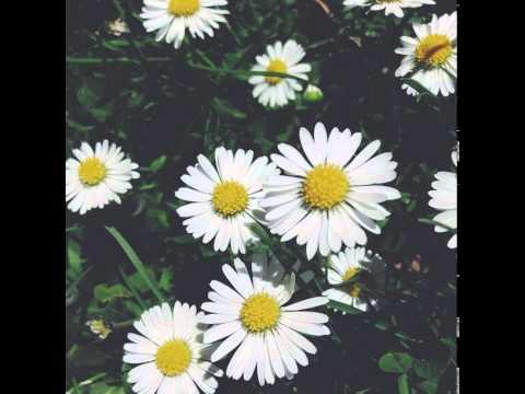My garden flowers!! #Ilove #nature #flowers #sopretty #gladiolus #hydrangea