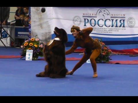 Танцы с собаками Кубок Мастеров 2013. Dog Dancing. Canine Freestyle.