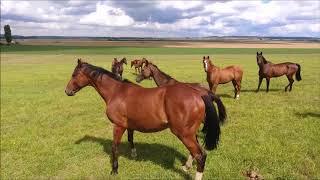 Pension de chevaux - Domaine de Boasne