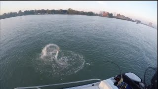 [Fall Musky Fishing- HUGE Boatside Strike (HD)] Video