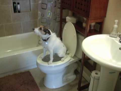 dog pooping in toilet