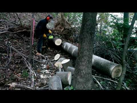 Cutting Tree Trunk With Chainsaw video