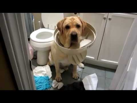 ? Perro atrapado en la tapa de la basura ? humor perros ? videos mas vistos