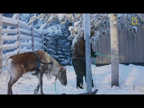 Hitch a Ride with Reindeer Herders