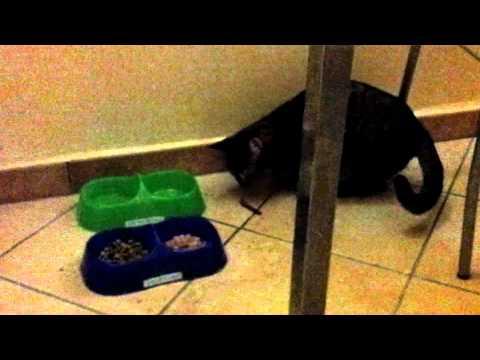 Chicca gatta matta