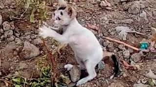 Baby and Cat Fun and Failss - Funny baby video