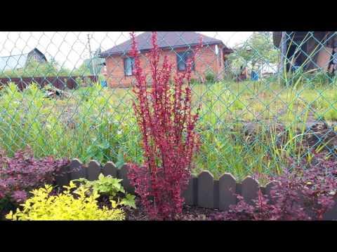 Цветной уголок сада. Яркие краски.