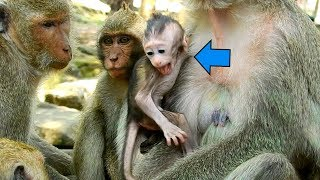 Why Dolly Take Baby Prutus JR From Jill?| Very Silly Mommy Dolly Always Do Stupid Thing ON Baby
