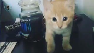 Kasım Ayının En Komik Yavru Kedi Videoları 🐈 Komik Kediler 2018 #bluesky