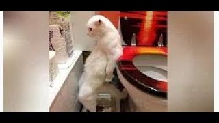TRY NOT TO LAUGH - Funny Animals Compilation | Cute Dog Videos | Funny Vines