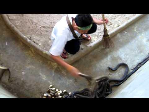 Limpando o ninho de cobra