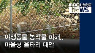 R)야생동물 피해..마을형 울타리 대안