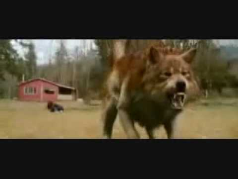Jacob Black turing into a Wolf SLOW MOTION Video