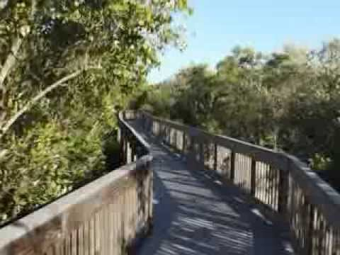 Tower Circle Boardwalk on Weedon Island Preserve