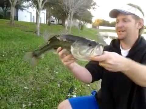 Bass fishing Sarasota,FL