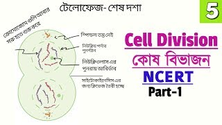 Railway Exam Biology || Cell Division| Phases of Mitosis || NCERT