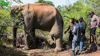 🔴 Save the wild elephants: Working to protect elephants in the wild