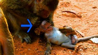 Very Bad Temper Dolly Hit Baby Sweetie Seriously|  Baby Sweetie Cry Loudly| Why Mommy Dislike Baby?
