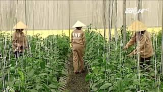 (VTC14)_Công nghệ trồng rau hữu cơ Israel