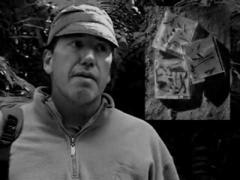 Lodger ft. Rhys Ifans - Bardot