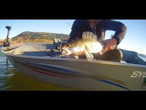 Pêche Du Sandre Et De La Perche à La Verticale, Float-tube Et Bateau